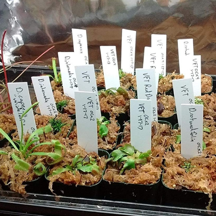 Must-Have Products To Start Seedlings Indoors