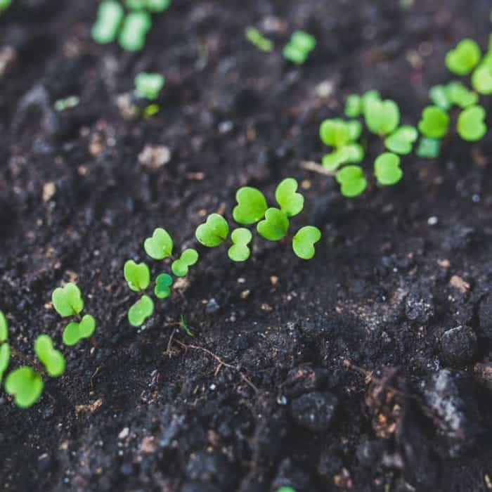 Before Spring Is In Full Swing: Spring Garden Tips To Keep In Mind