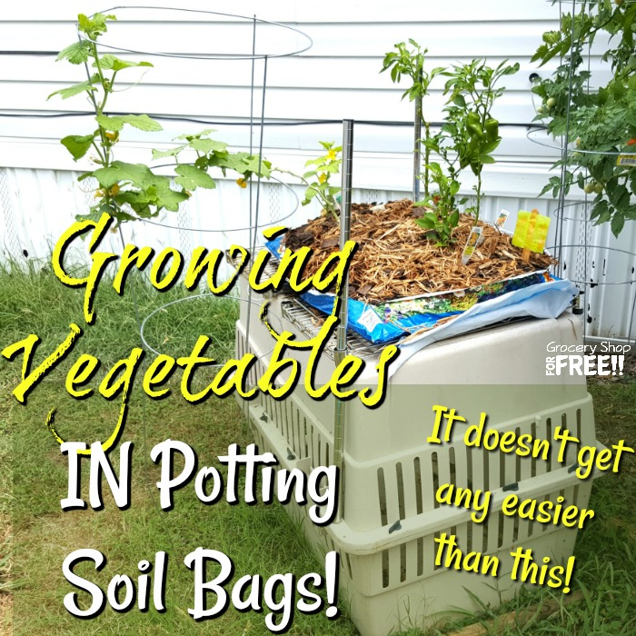 Growing Vegetables In Potting Soil Bags