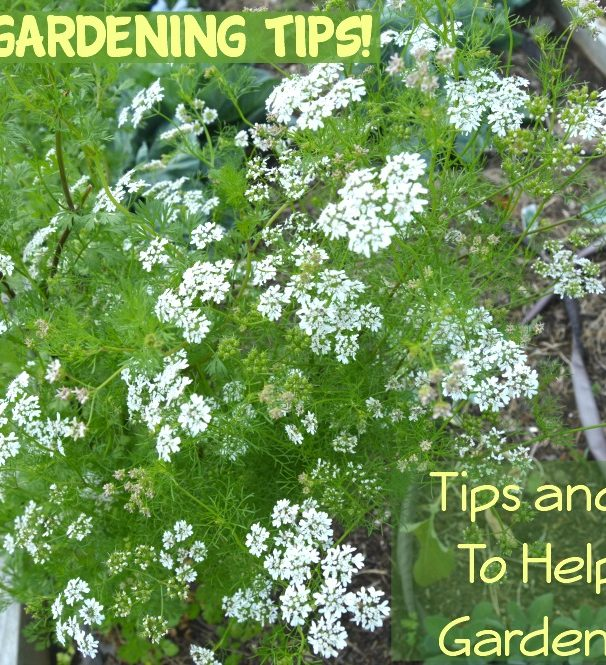Basic Home Gardening Tips, Tricks & Ideas!