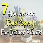 7 Homemade Bug Sprays For Indoor Plants!