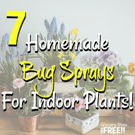 7 Homemade Bug Sprays For Indoor Plants!