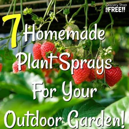 7 Homemade Plant Sprays For Your Outdoor Garden