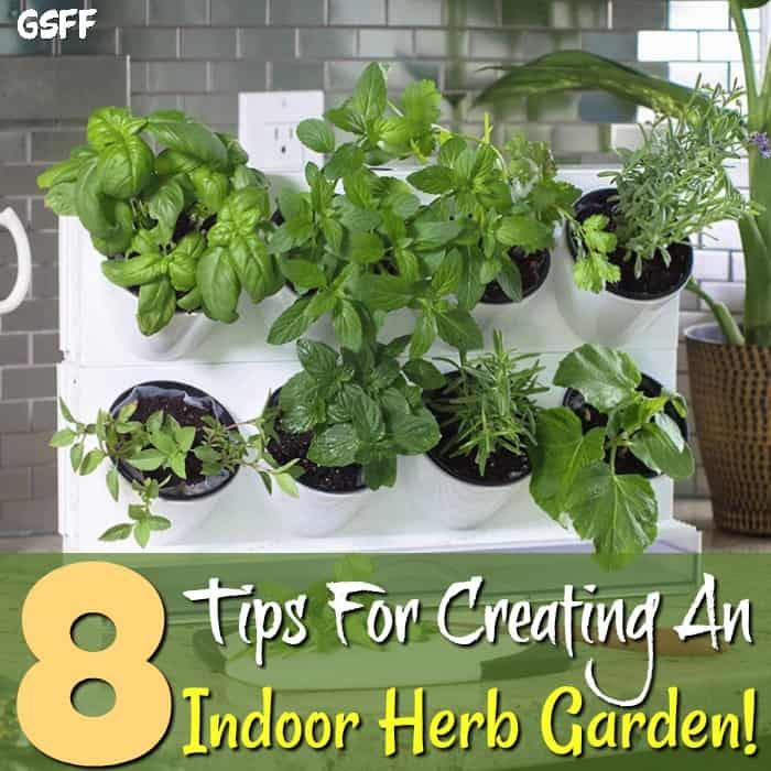 Want to learn more about how to grow herbs indoors? These tips on care, lighting & other secrets will make your indoor herb garden is happy, all year round.
