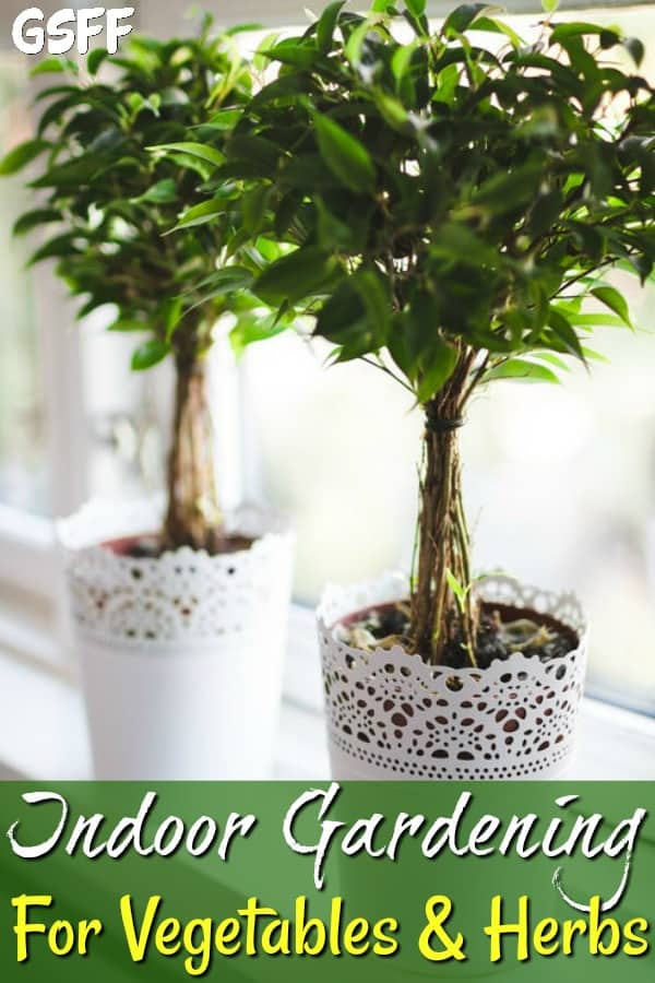 Want to grow vegetables & herbs, but, don't have the space?  Check out these Indoor Gardening Ideas For Vegetables And Herbs!  No Backyard, No Problem!
