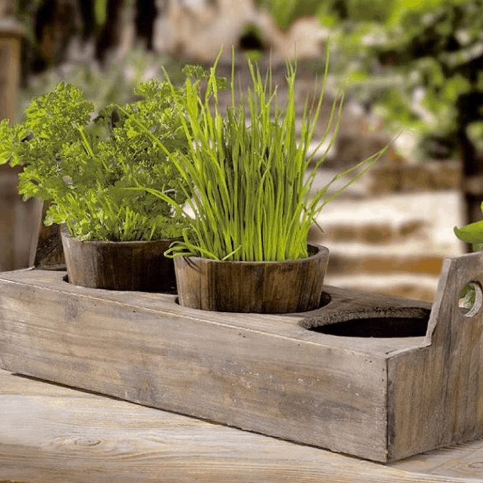 Grow Each Herbs Individually