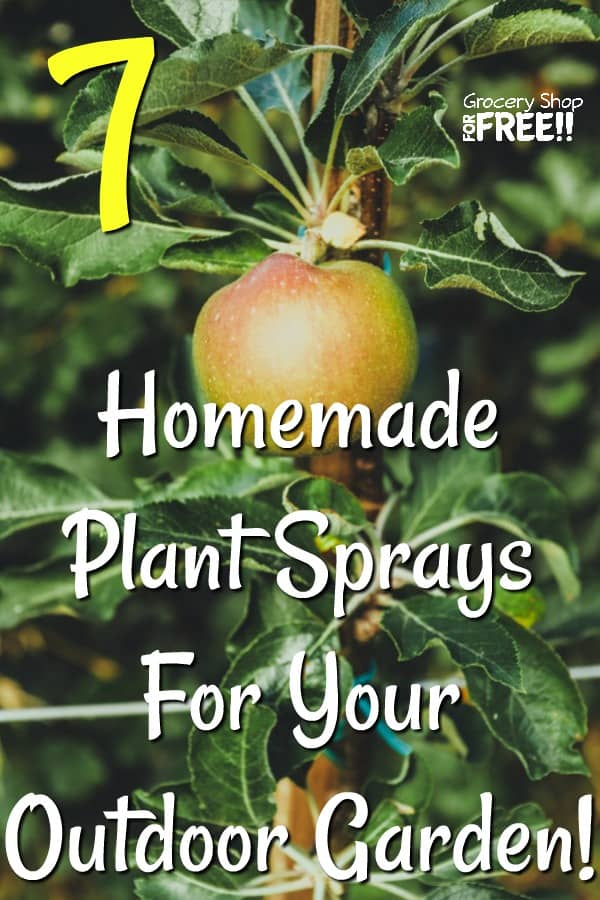 Growing an outdoor garden is very beneficial for your health and for the environment.  Whether it's vegetables, herbs, or flowers, it can be hard to keep them healthy without spending a fortune on sprays.  Here are 7 Homemade Plant Sprays You can make and use in your outdoor garden.