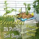 Growing Vegetables IN Potting Soil Bags