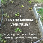 Tips For Growing Vegetables