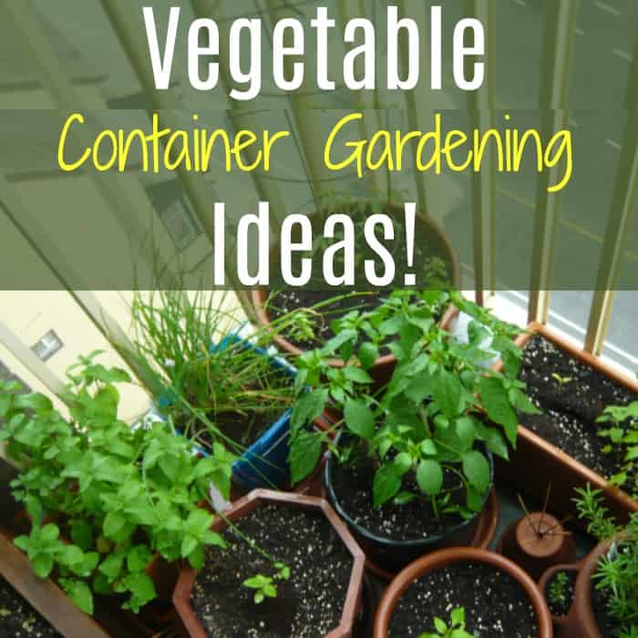 Are you looking for some Vegetable Container Gardening Ideas?  These container gardening tips & tricks will have you growing veggies inside or out in no time!