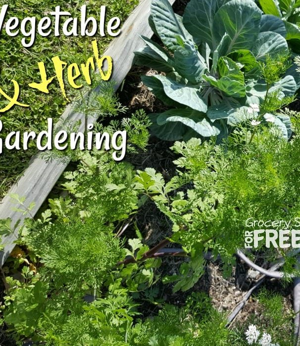 Vegetable & Herb Gardening