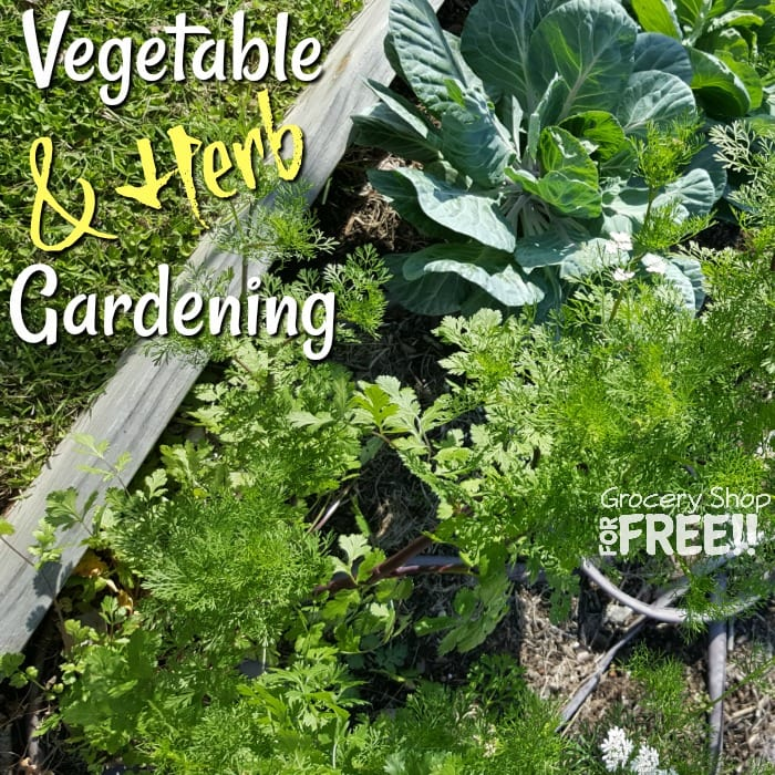 Vegetable & Herb Gardening for beginners and beyond.
