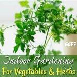 Indoor Gardening For Vegetables & Herbs