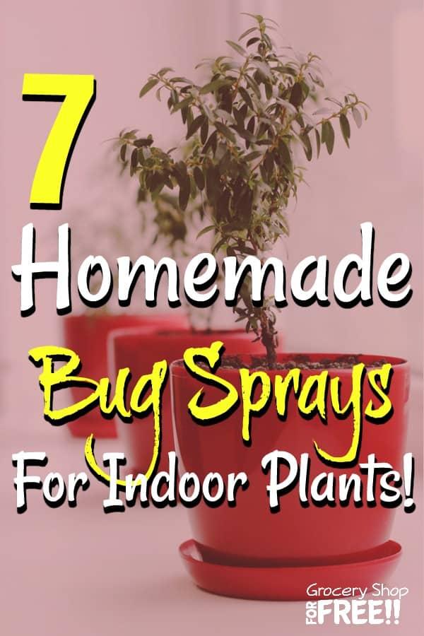 7 Homemade Bug Sprays For Indoor Plants