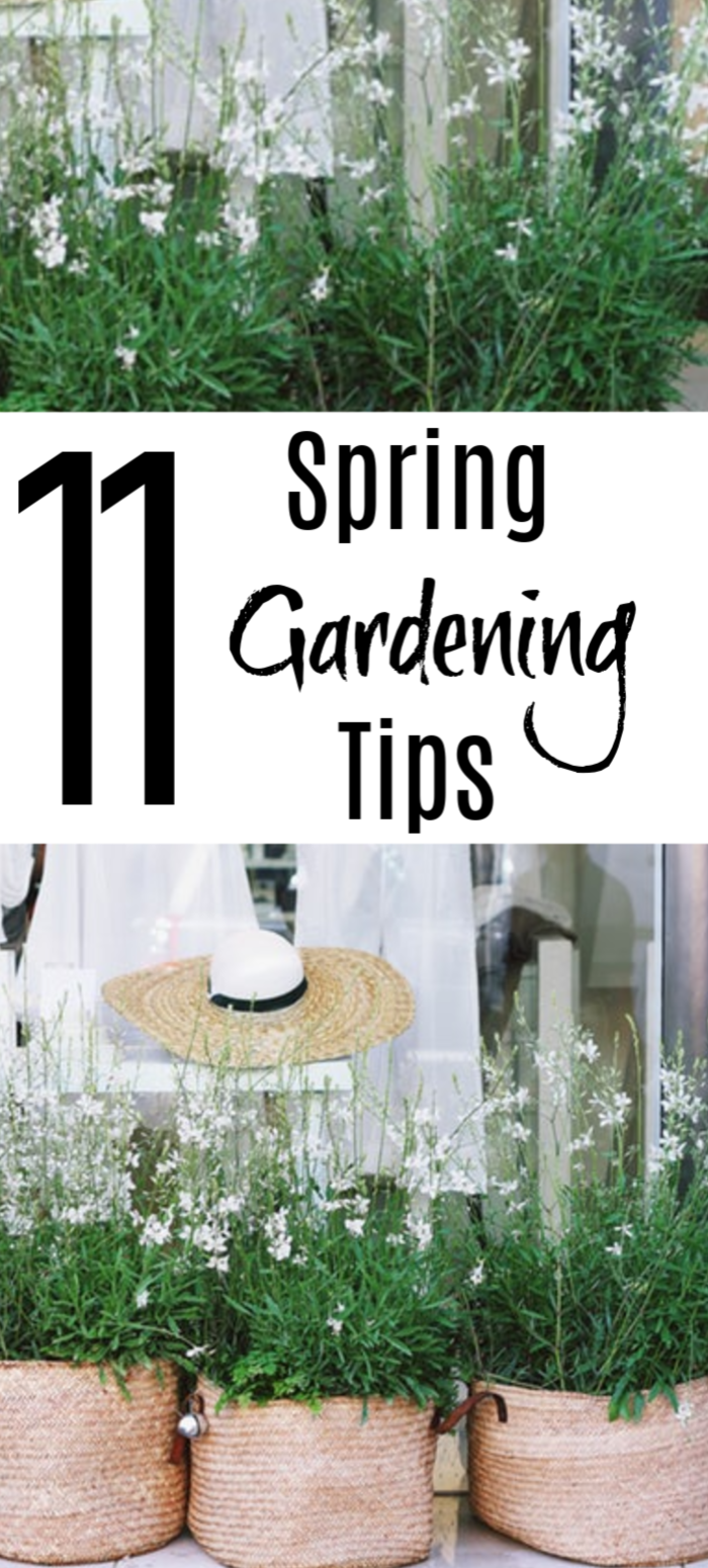 You can never learn too much about gardening. These Spring Gardening Tips are a tool you can add to your arsenal to ensure you have a successful growing season.