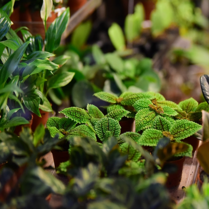 Over Watered plants often lead to dead plants rather quickly, however, these 5 steps will save your plants from overwatering &  prevent it from happening again.