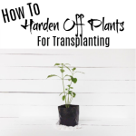 How To Harden Off Your Plants