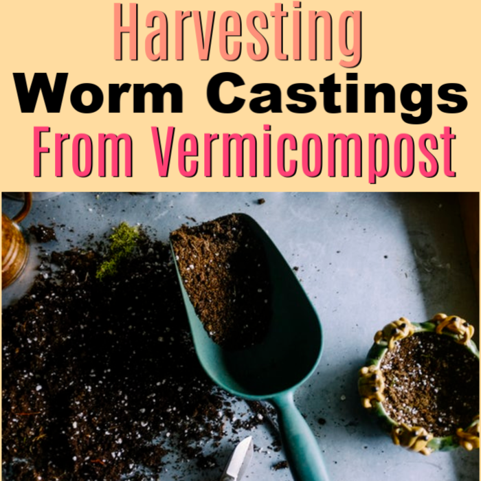 Ready to harvest your worm castings?  Have you been vermicomposting with a worm bin?  Is it time to harvest and you don't know where to start?  Start here >>&#8221; class=&#8221;wp-image-3768&#8243;/></figure></div>    <h2><strong>Ready For Use: How To Start Harvesting Worm Castings</strong></h2>    <div class='code-block code-block-2' style='margin: 8px auto; text-align: center; display: block; clear: both;'> <script async src=