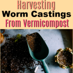 How To Harvest Worm Castings From Your Vermicompost (3)
