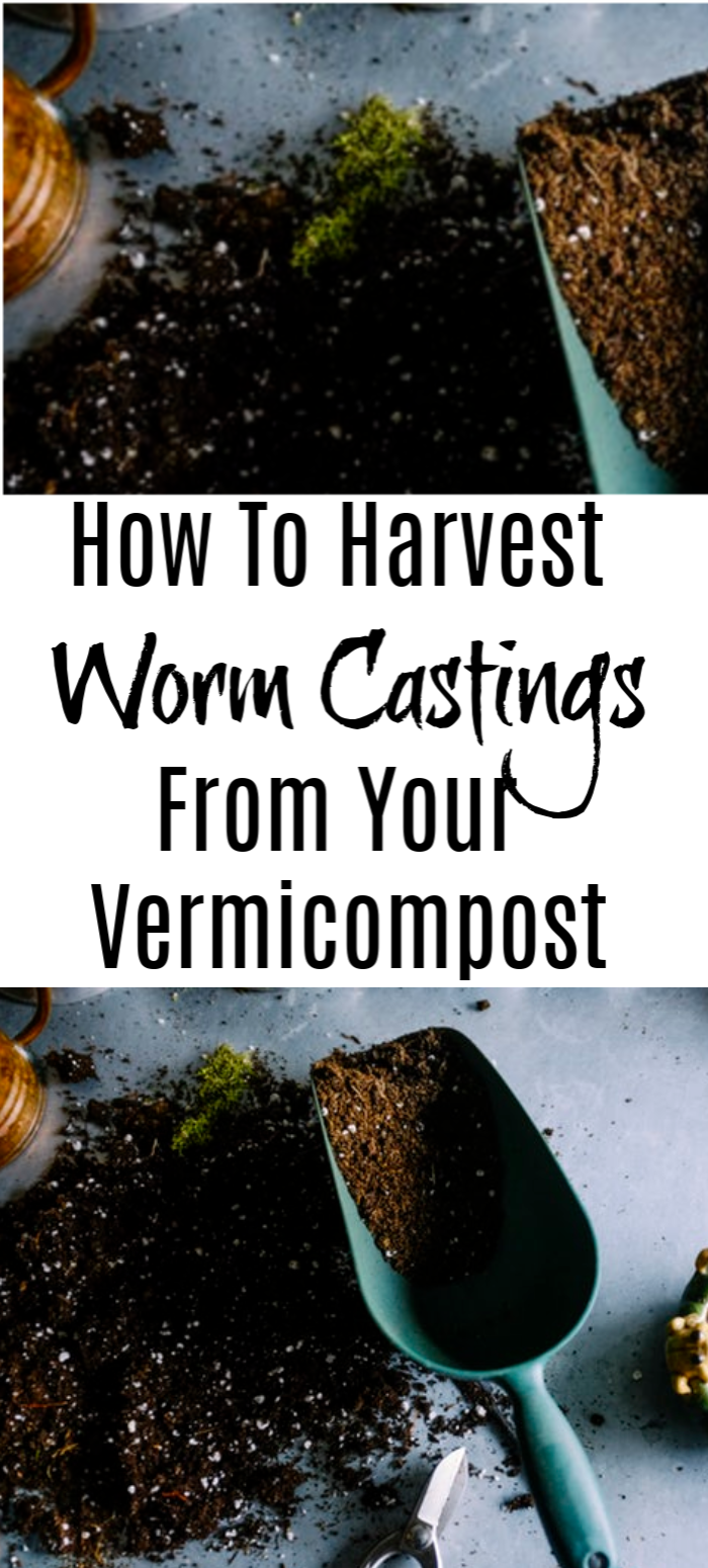 Ready to harvest your worm castings?  Have you been vermicomposting with a worm bin?  Is it time to harvest and you don't know where to start?  Start here >>&#8221; class=&#8221;wp-image-3770&#8243;/></figure> <p><a href=