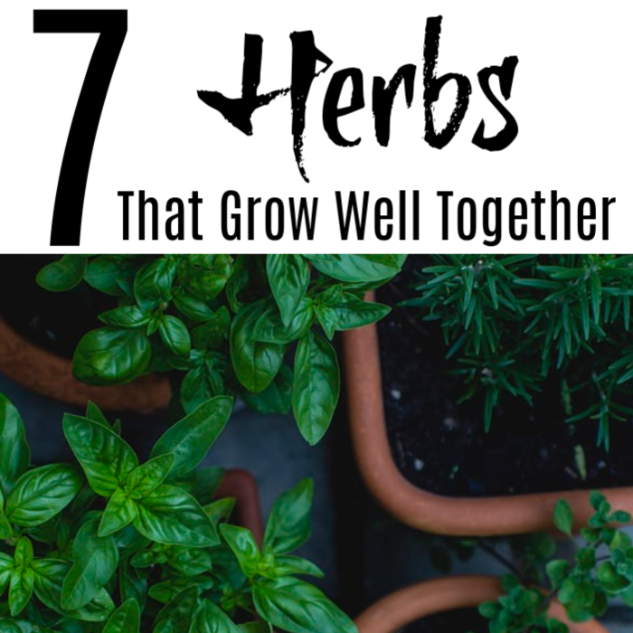 Knowing which herbs you can grow together will make your herb growing more rewarding and fruitful.