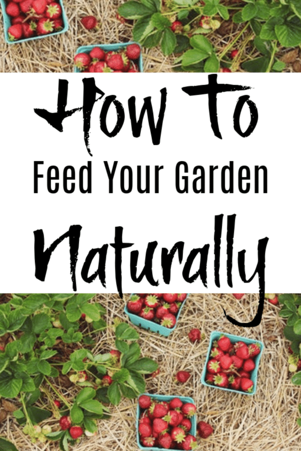How To Feed Your Garden Naturally  Avoid using chemicals on your garden.  These items can be found in your home & are safe for your family.