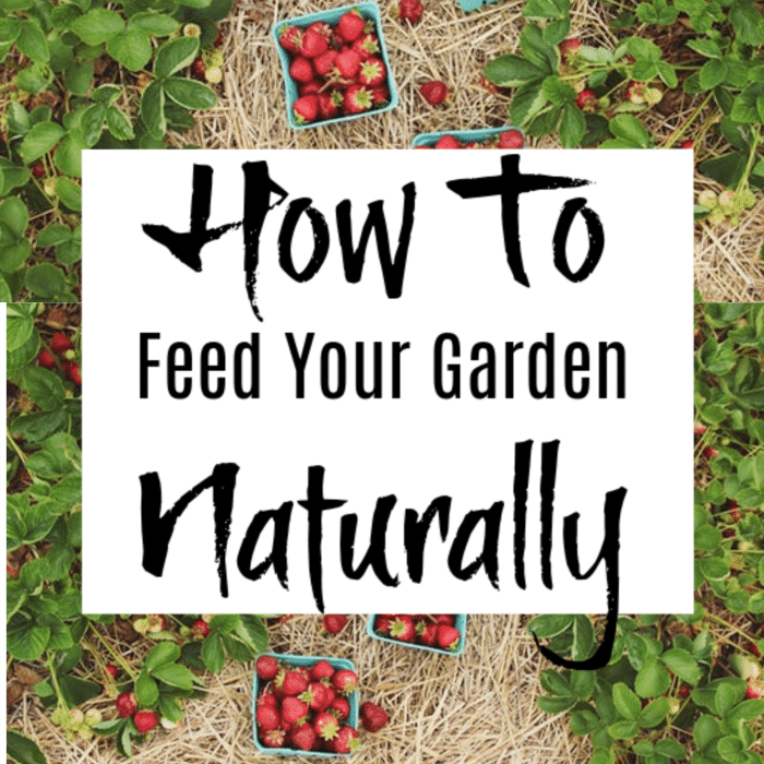Feed your plants naturally.  Avoid using chemicals on your garden.  These items can be found in your home & are safe for your family.