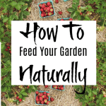How To Feed Your Garden Naturally (3)