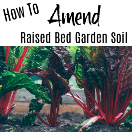 How to Amend Raised Garden Bed Soil For Growing Successfully