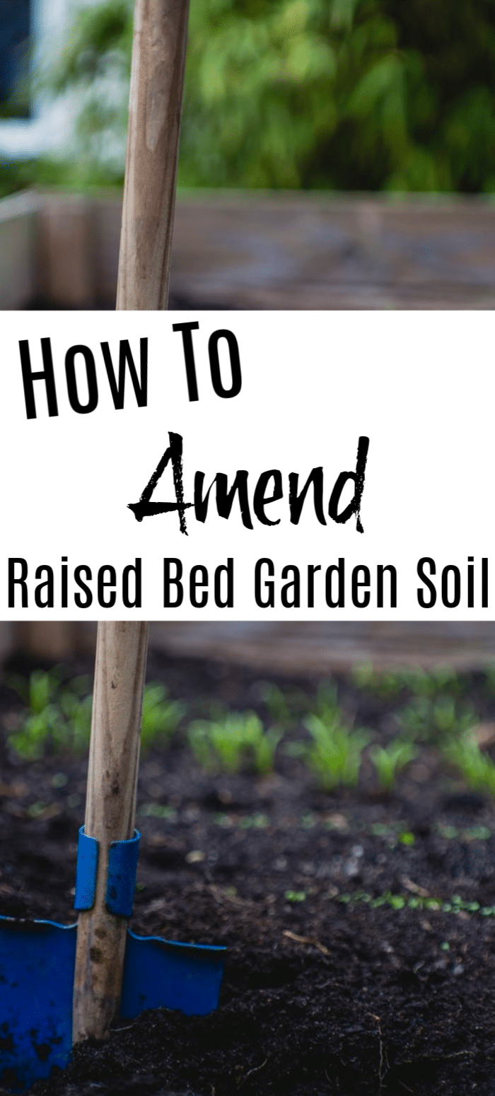 Raised beds are beneficial to gardeners for many reasons from ease of tending, to more control over the soil content.  Knowing how to amend your soil is crucial to raised bed gardening.