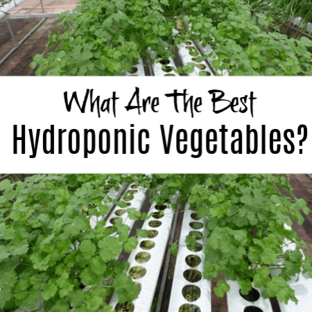 What Are The Best Hydroponic Vegetables?