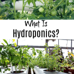 What is Hydroponics And How Does It Work?