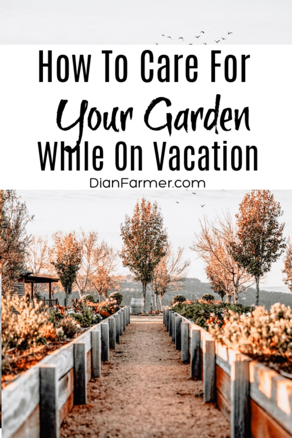 Every gardener worries about garden care while on vacation. Because day to day we give so much to nurture our gardens, we don't want to come back and find the plants in trouble.  Here are a few tips to help alleviate the worry about your garden while you're on vacation