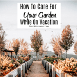 How To Care For Your Garden While On Vacation (3)
