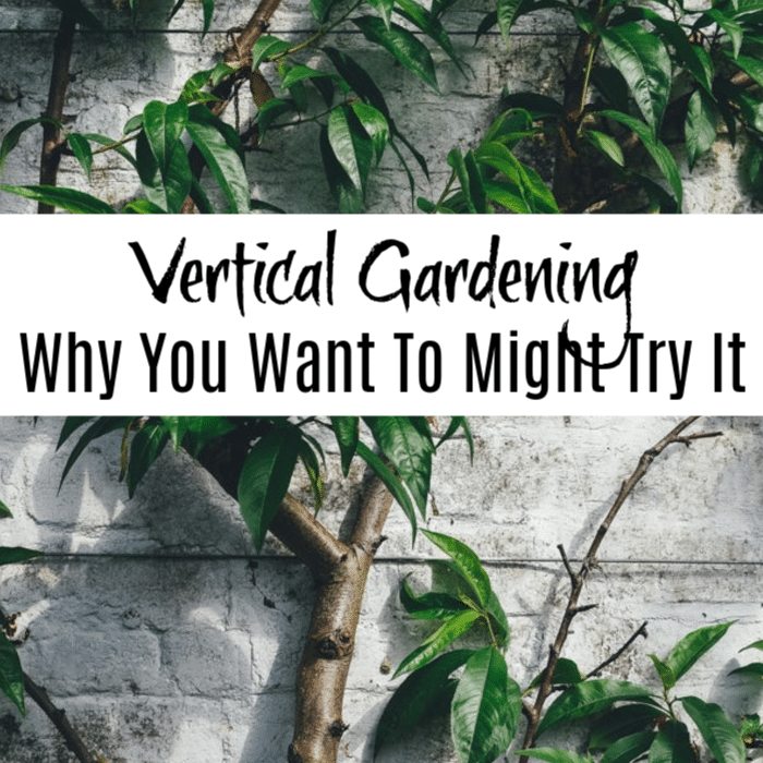 Vertical Gardening may be perfect for you.  Check out all the reasons you should try vertical gardening to grow your vegetables as well as flowers and other plants.