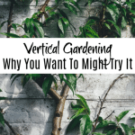 Vertical Vegetable Gardening_ Why It Might Be Right For You (3)