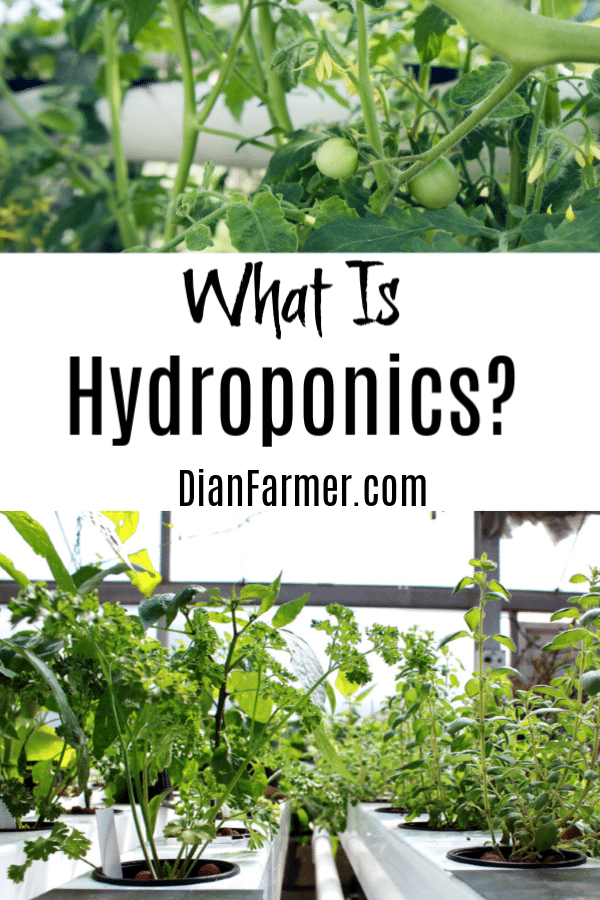 Hydroponic gardening isn't new, but it's taking off right now.  If you're asking What is Hydroponics and How Does It Work, then read on, my friend.