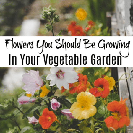 Flowers You Should Be Growing In Your Vegetable Garden