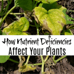 How Nutrient Deficiency In Plants Affects Them