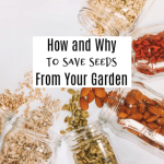 Why And How To Save Seeds From Your Garden