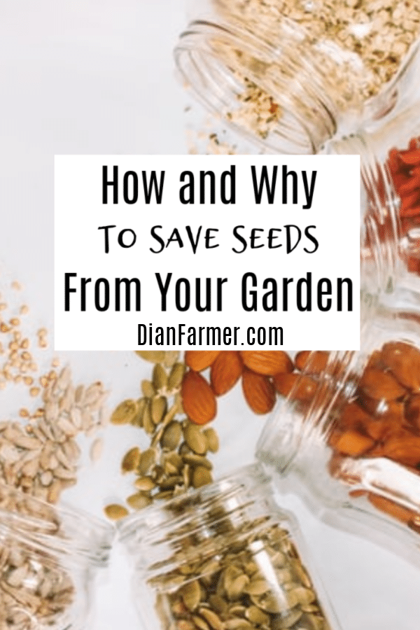 How and Why to Save Seeds from Your Garden for Next Year (2)