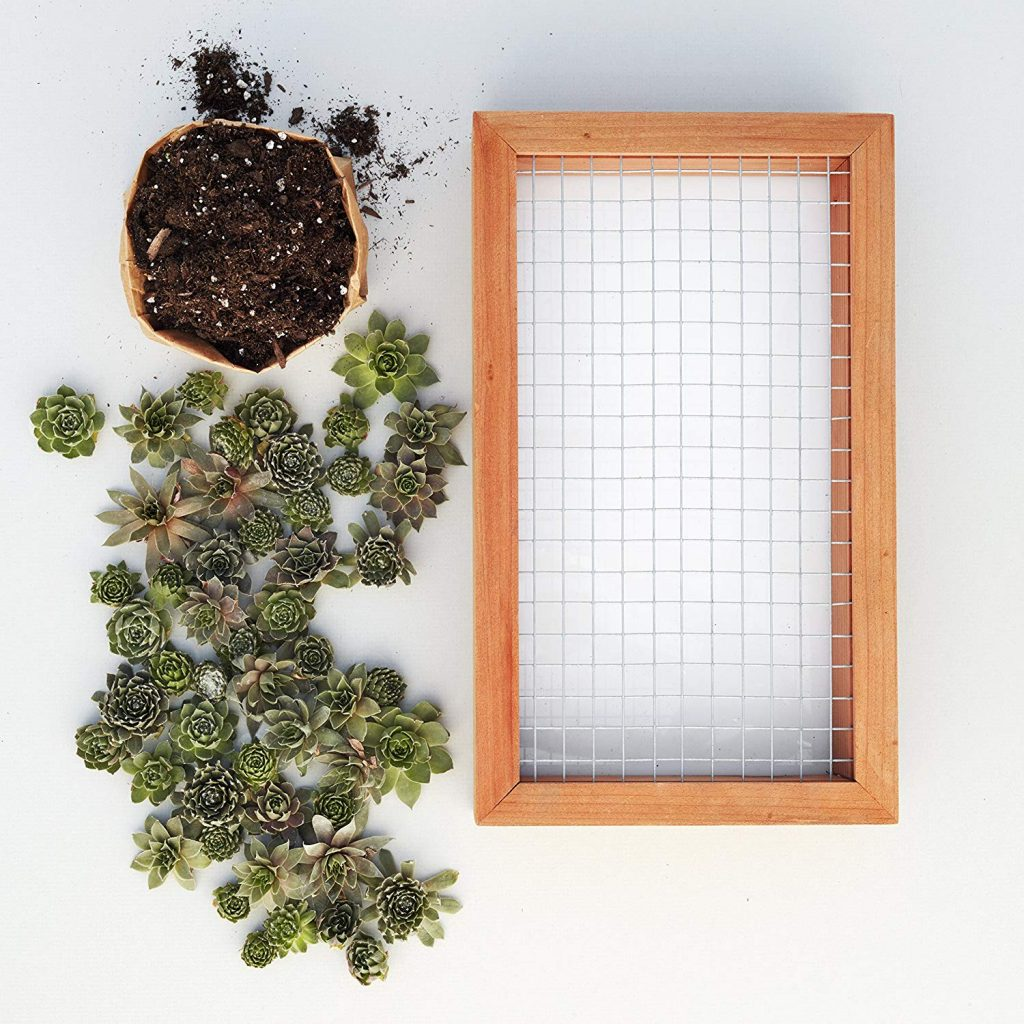 Succulent Living Picture Planter DIY Kit