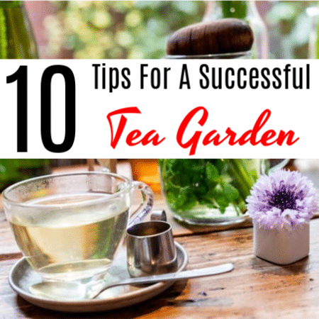 10 Tips For A Successful Tea Garden