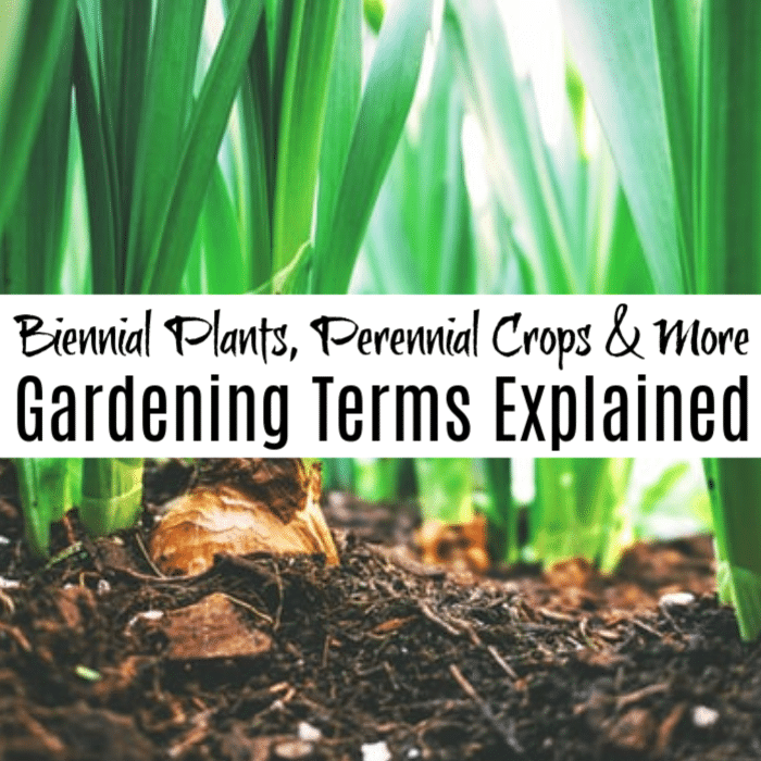 When you first begin gardening you are faced with terms you may not understand, such as Biennial Plants, Perennial Crops, and Annuals.  Here we will explain each of those and more terms so you can get on with the fun of growing.