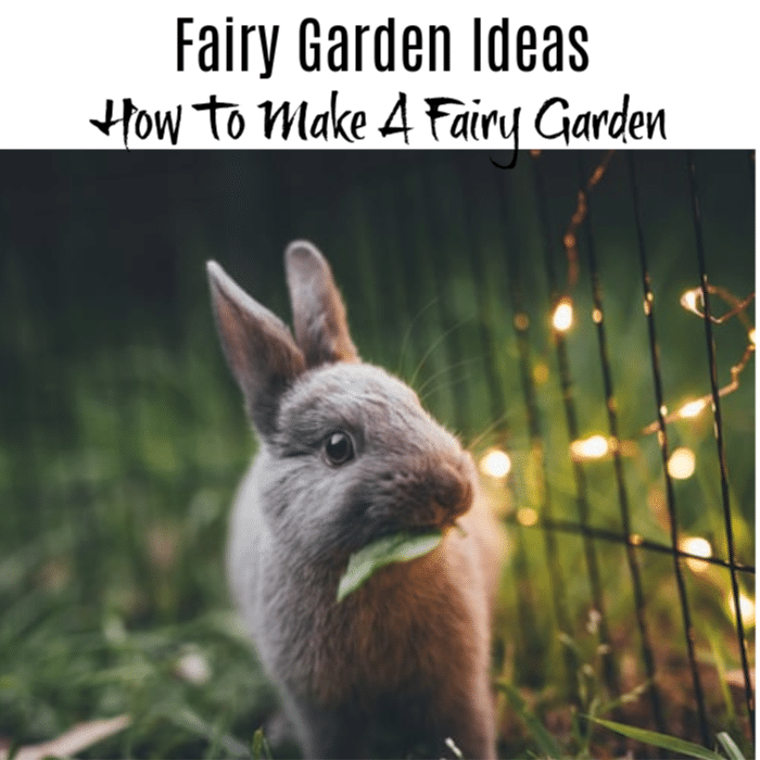 A Fairy Garden can be a great bonding experience for you and your kids as well as a great addition to your garden. If your're looking for instructions and ideas, just click through to read more.