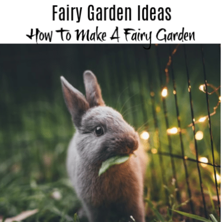 Fairy Garden Ideas:  How To Make A Fairy Garden