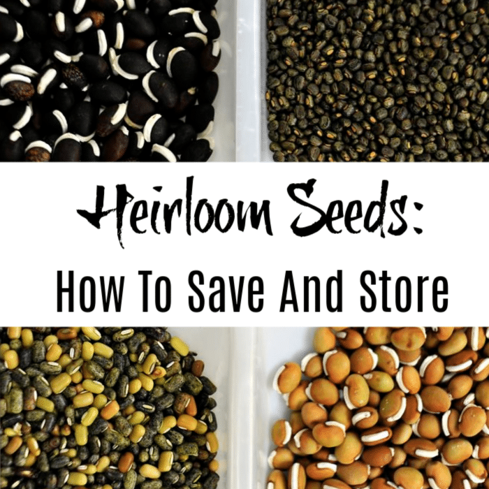 Saving and storing heirloom seeds for use int he years to come is important to gardeners. If you're looking for the best way to do that, then click through and we'll show you.