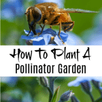 How To Grow A Pollinator Garden And Plants That Attract Pollinators