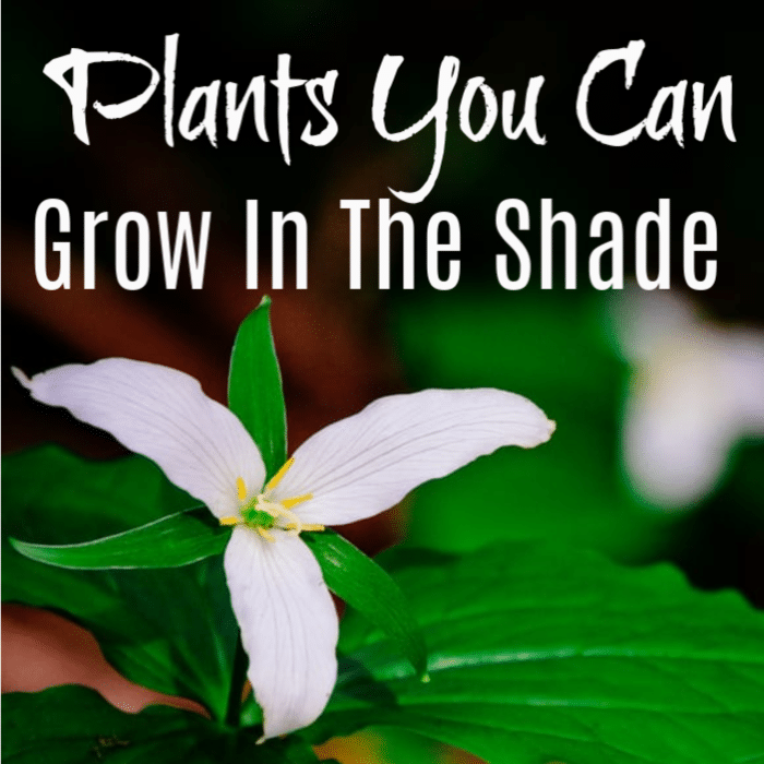 If you want to grow a beautiful garden but you don't have a lot of sun, then these shade loving perennials will solve your problem!  Take a look!
