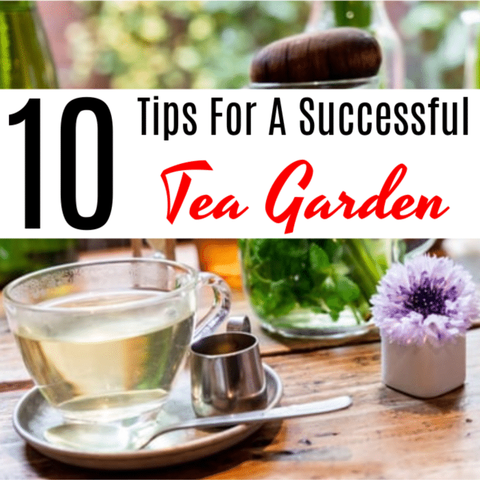Having a garden is great, but make sure you grow what you love. Do you love tea? Why not <a href=